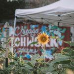 COVID-19 açlık sorununu artırıyor; kent bahçeleri buna çözüm olabilir mi?